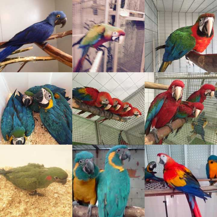macaws, cockatoos African greys And Fertile Eggs For Sale